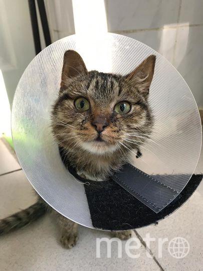 Кот на реабилитации. Фото предоставила Елизавета Скорынина