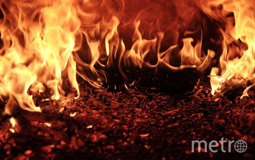 Площадь ландшафтных пожаров составляет более 50 тысяч гектаров. Фото raquel raclette