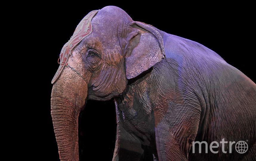 Цирковой слон. Фото Pixabay