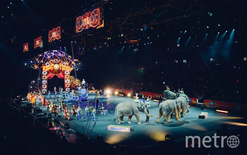 Цирк. Фото Pixabay