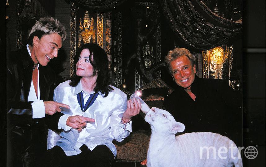 всемирно известные иллюзионисты и защитники природы Зигфрид и Рой позируют с певцом Майклом Джексоном и Аполлоном, редким белым сибирским тигром за кулисами в Мираже 6 августа 2002 года в Ласе Вегас, Невада. Фото Getty