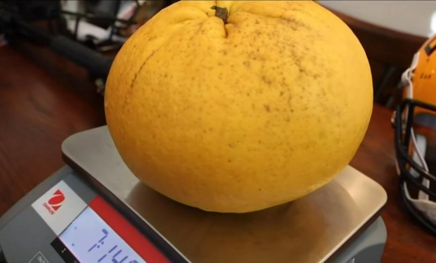 В США семейная пара Мэри Бет и Дуг Майеры вырастила самый большой в мире грейпфрут. Фото Скриншот https://www.youtube.com/watch?v=Vi3EwbklOEY, Скриншот Youtube