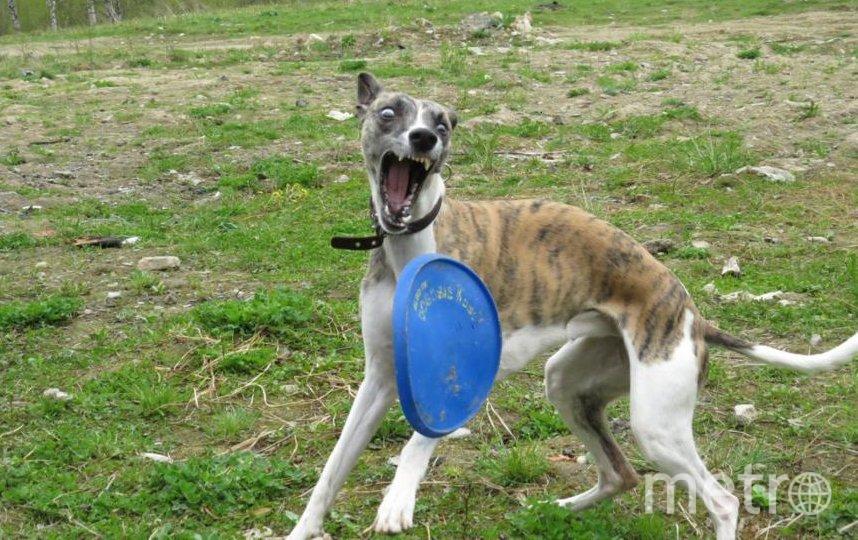 """Фото собаки сестры мужа - добрейшей, любящей детей и очень терпеливой Шанти. Как-то на прогулке:). Фото Светлана, """"Metro"""""""