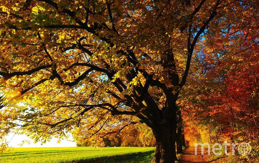 К середине сентября листва на деревьях становится жёлто-оранжево-красной. Чем не повод сделать несколько памятных снимков? Фото pixabay