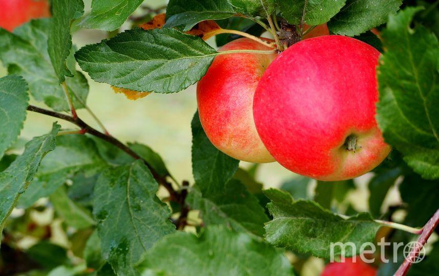 так как яблок в этом году очень много, блюда из них можно готовить весь месяц. Фото pixabay