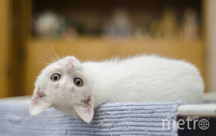 Котёнок. Фото Pixabay