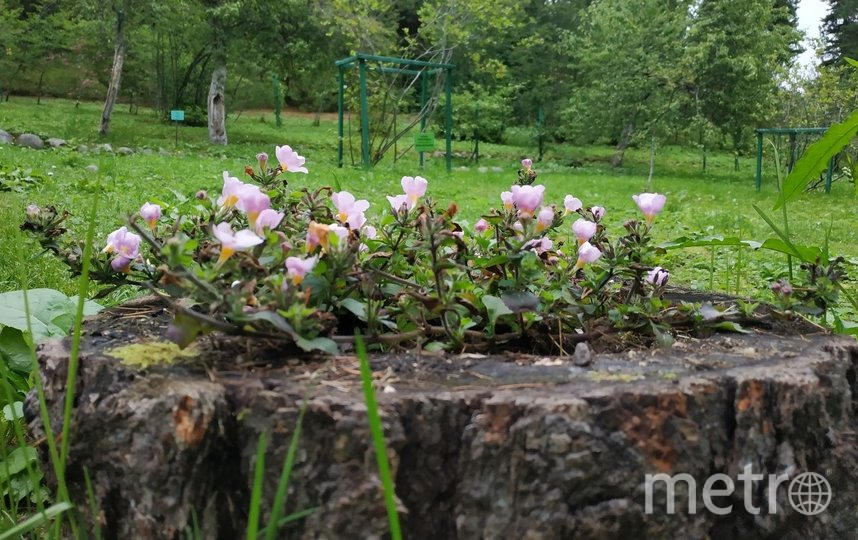"""Ботанический сад на Соловках. Фото Наталья Сидоровская, """"Metro"""""""