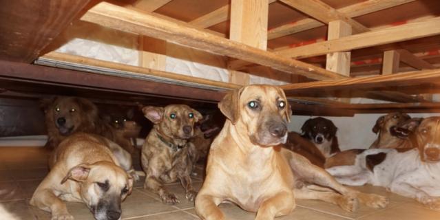"""Жительница Багам приютила у себя 97 бездомных собак во время урагана """"Дориана""""."""