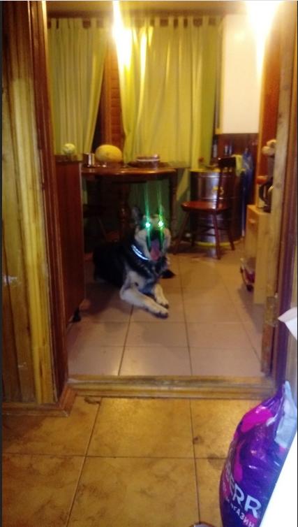 """Это Бари, и он готов подраться со всеми собаками в районе. Фото Николай , """"Metro"""""""