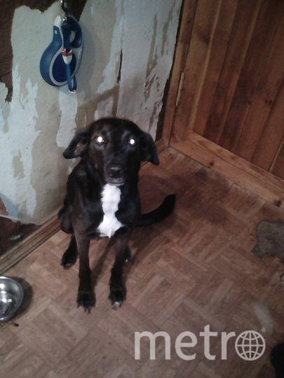"""Зельва может и хочет быть """"собакой Баскервилей"""", но уж слишком она добрая и скромная. Фото Макс, """"Metro"""""""