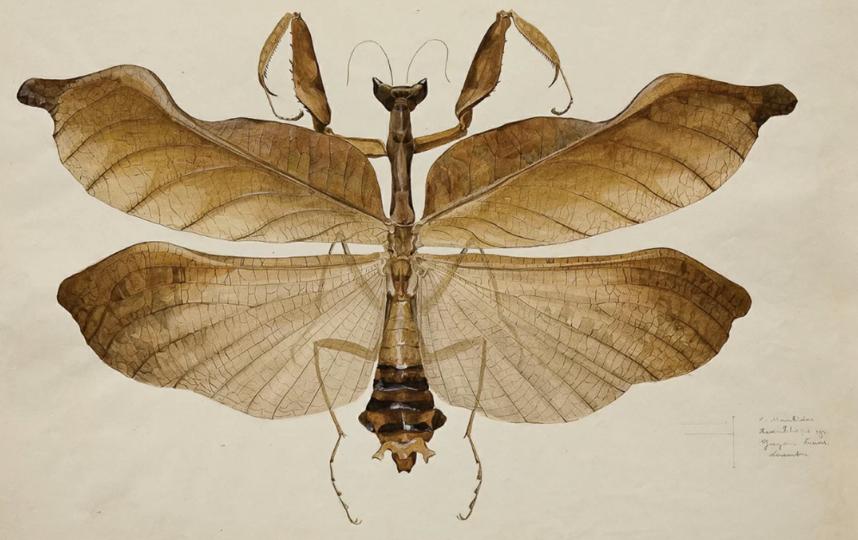 В Дарвиновском музее расскажут, чем представители флоры и фауны похожи друг на друга. Фото mos.ru