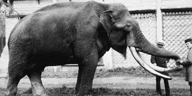 1870 год. Слон, подаренный зоосаду императором Александром II.