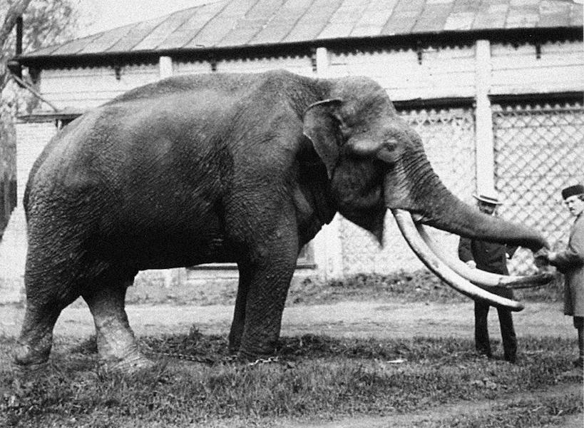 1870 год. Слон, подаренный зоосаду императором Александром II. Фото пресс-служба Московского зоопарка