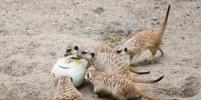 Новосибирский зоопарк принимает в дар полезные угощения для животных