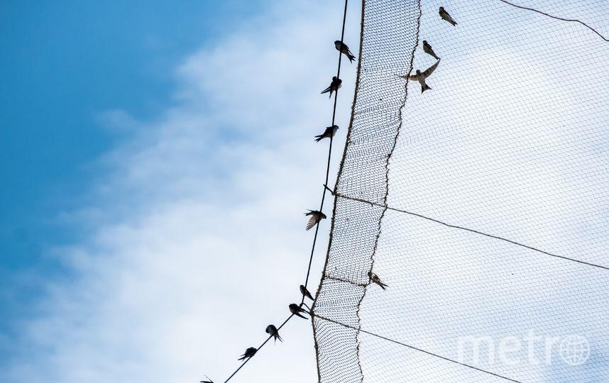"""Орнитологи сравнивают ловушку с гигантским сачком или футбольными воротами. Фото Алена Бобрович, """"Metro"""""""