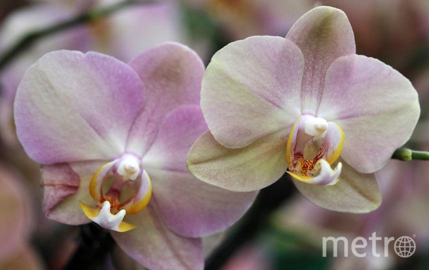 """Выставка """"Планета орхидей"""" пройдет в Государственном Биологическом музее. Фото Getty"""