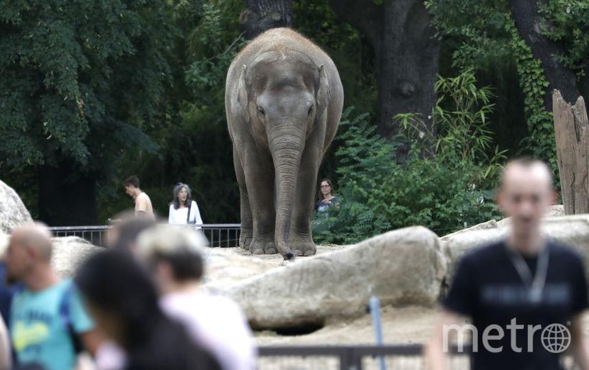 Слон из Берлинского зоопарка. Фото Getty