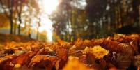 Синоптики пообещали новосибирцам солнечную и тёплую неделю