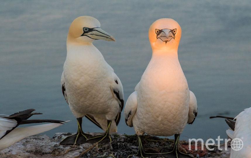Непристойное предложение. Фото Go Grift / Comedy Wildlife Photography Awards