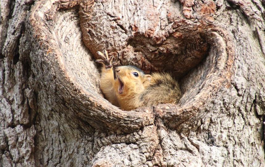 Кому арахиса? Фото Corey Seeman / Comedy Wildlife Photography Awards