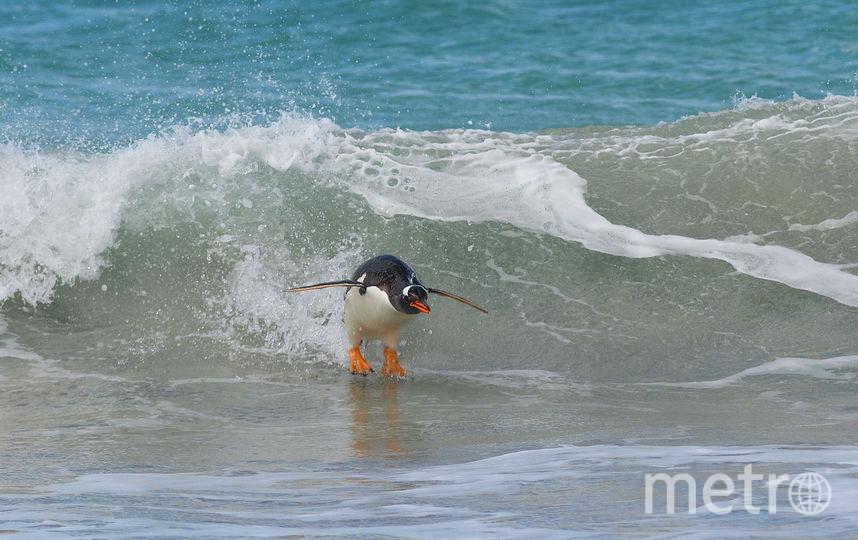 Сёрфинг в южноатлантическом стиле. Фото Elmar Weiss / Comedy Wildlife Photography Awards