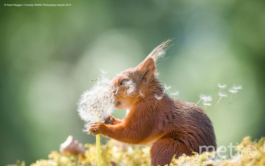 Желание бельчонка. Фото Geert Weggen / Comedy Wildlife Photography Awards