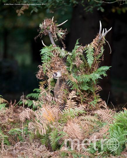 Олень, какой олень? Фото Mike Rowe / Comedy Wildlife Photography Awards