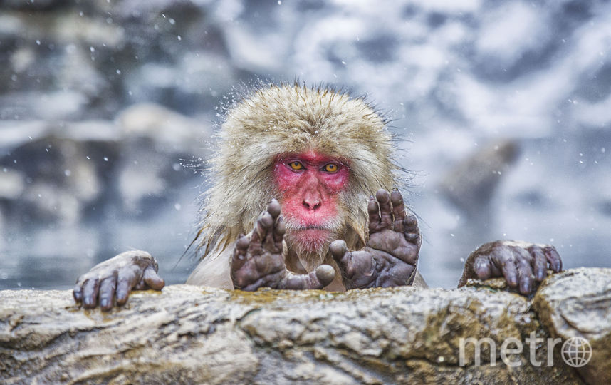 Чего ты ищешь здесь? Фото Pablo Daniel Fernandez / Comedy Wildlife Photography Awards
