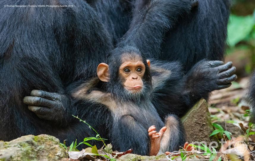 Расслабился. Фото Thomas Mangelsen / Comedy Wildlife Photography Awards