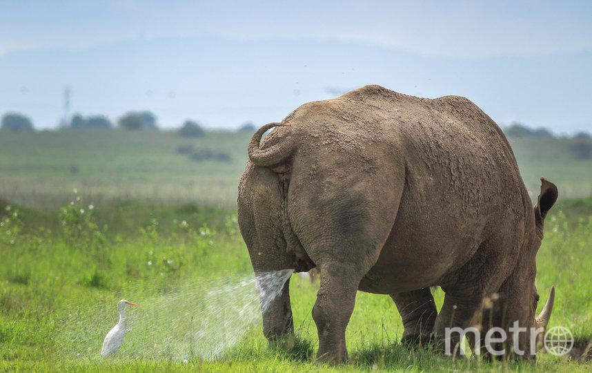 Охраняемая территория. Входить на свой страх и риск! Фото TILAKRAJ NAGARAJ / Comedy Wildlife Photography Awards
