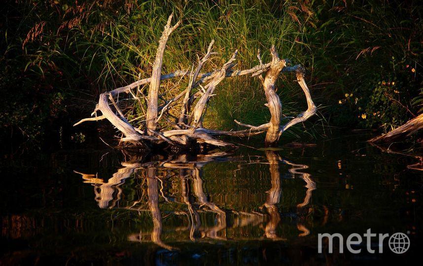 Неглерия Фоулера обитает в водоёмах. Фото Pixabay
