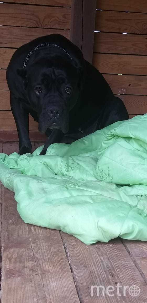 "Самая добрая собака в мире – Бэкки. Фото Ирина, ""Metro"""