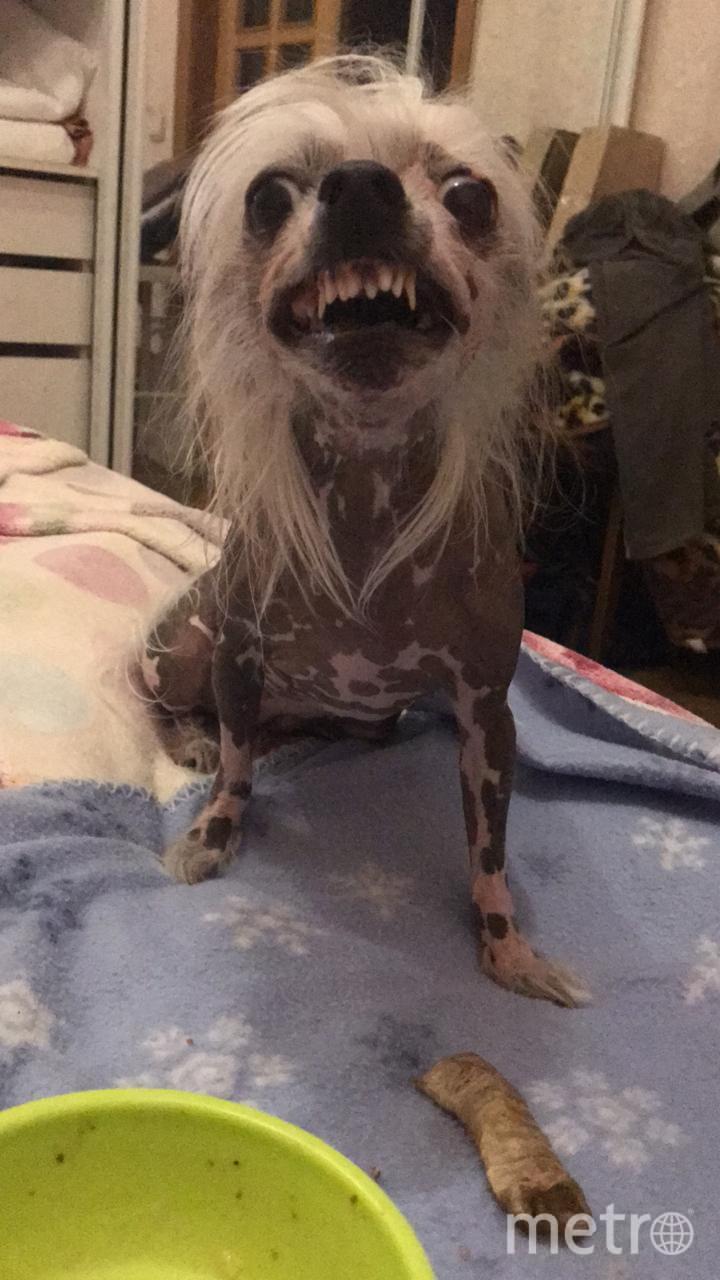 """А это собака-целовака Маняша. Стоит кому-то подойти к её миске, как она сразу показывает свои зубки. Фото  Наталия, """"Metro"""""""