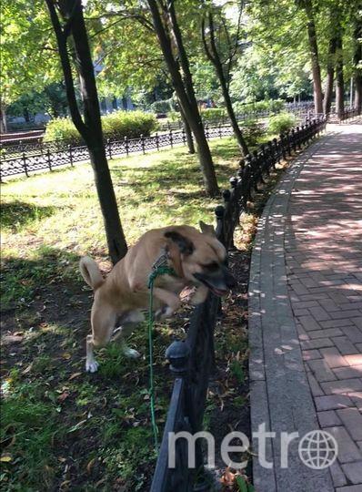 """Рыжик, может и похож на """"собаку Баскервилей"""", но на самом деле он - большой добряк. Фото Елена, """"Metro"""""""