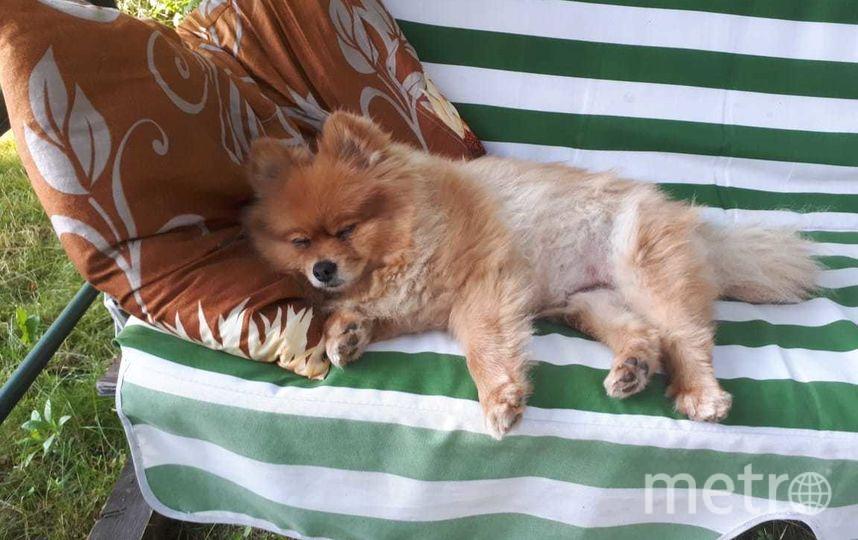 """Не буди лихо, пока оно тихо. Это Влада, самая ласковая и добрая собака на свете. Фото Максим, """"Metro"""""""