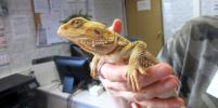 Редких рептилий осмотрели ветеринары в петербургском аэропорту Пулково
