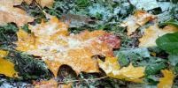 МЧС предупреждает о первом снеге и заморозках в Ленобласти