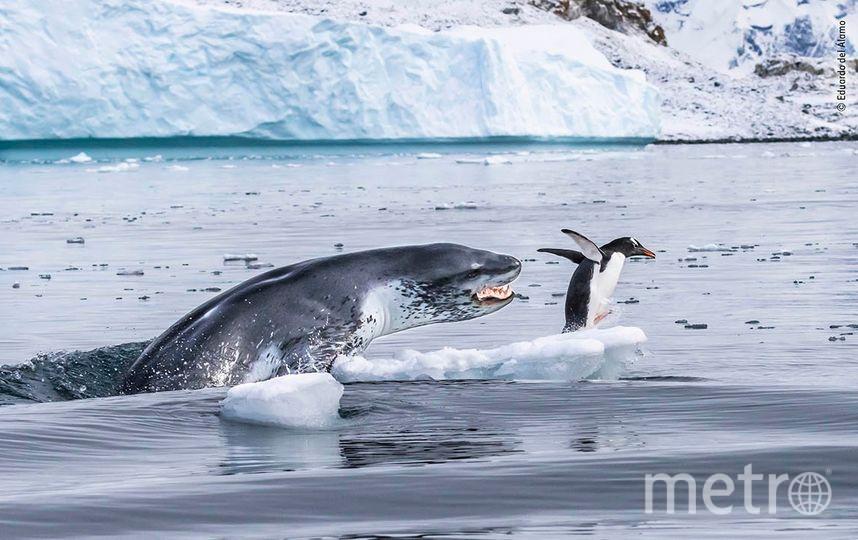 Если бы можно было взлететь. Фото Эдуардо Дель Аламо | Wildlife Photographer of the Year
