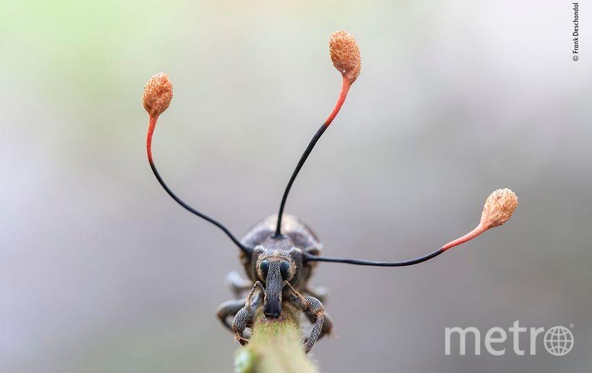 Ползком к смерти. Фото Фрэнк Десчендол | Wildlife Photographer of the Year
