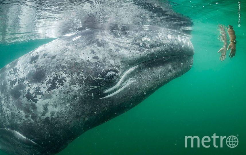 Касание доверия. Фото Томас П. Песчак | Wildlife Photographer of the Year