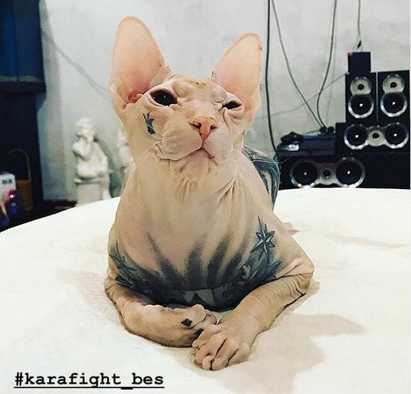 Кот по кличке Бес. Фото скриншот: instagram.com/karafight_bes/