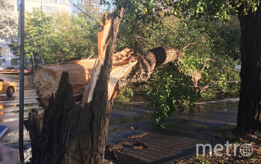 """Сильный ветер в Москве повалил дерево. Фото Екатерина Илюхина, """"Metro"""""""