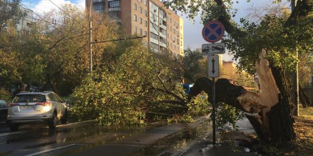 Сильный ветер в Москве повалил дерево.