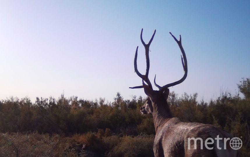 Всего в дикую природу было выпущено пять особей. Фото WWF России