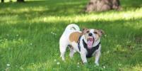Собаки Баскервилей живут в Петербурге: фото удивительных животных