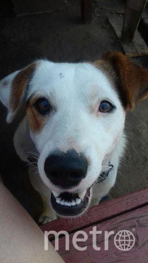 """Знакомьтесь,это Жужа - самый добрый пес в мире!Екатерина. Фото """"Metro"""""""
