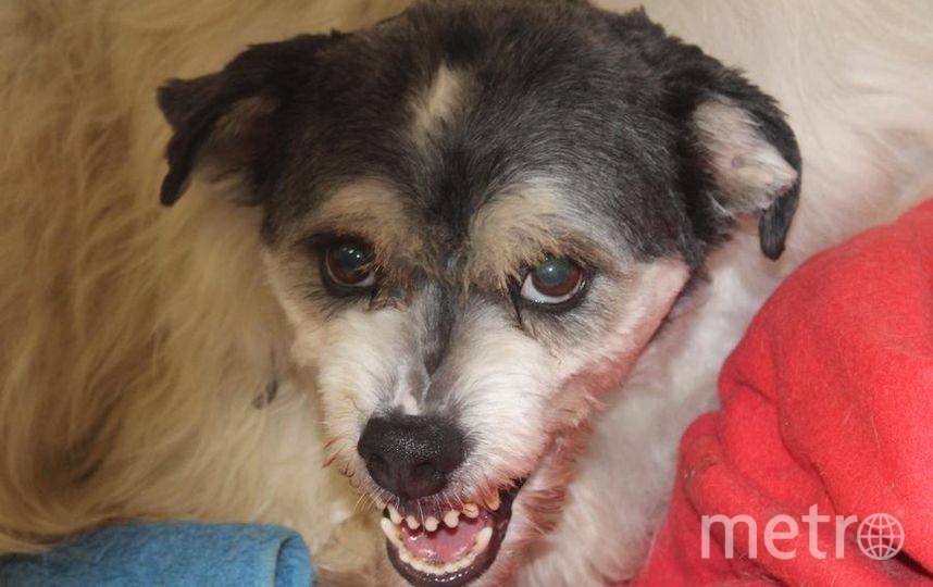 """Мой пёс Дизель. Всегда добрый и ласковый, но когда дело касается еды, Дизюша становится настоящим зверем!. Фото Заряна Якимова, """"Metro"""""""
