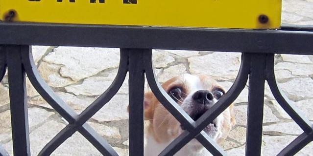 """Этого """"очень страшного"""" песку мы с женой увидели гуляя по г. Бергамо (Италия). Очаровательный прохвост напугал нас так, что пришлось скормить ему весь перекус из рюкзака. На табличке так и написано """"Осторожно злая собака""""."""