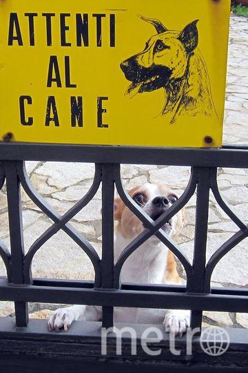 """Этого """"очень страшного"""" песку мы с женой увидели гуляя по г. Бергамо (Италия). Очаровательный прохвост напугал нас так, что пришлось скормить ему весь перекус из рюкзака. На табличке так и написано """"Осторожно злая собака"""". Фото """"Metro"""""""