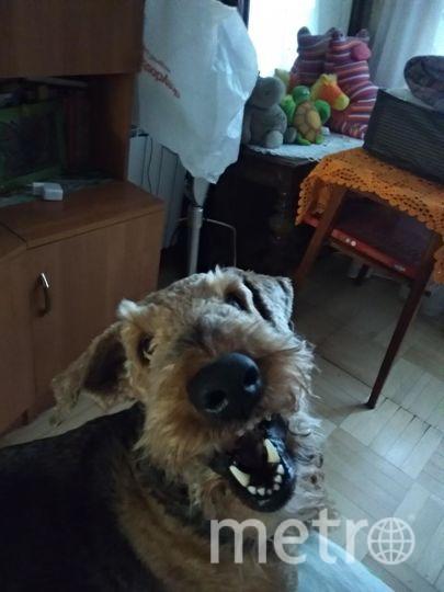 """Наша страшно опасная и любимая собака Марго)любим ее несмотря на всякие шалости).. Фото Мария., """"Metro"""""""